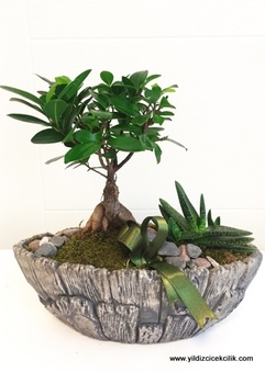 Bonsai ve Sculent